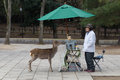 Tame deer and snack vendor in Nara Park, Japan Royalty Free Stock Photo