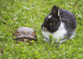 Tame rabbit and turtle in grass Royalty Free Stock Photo