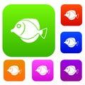 Tang fish, Zebrasoma flavescens set collection