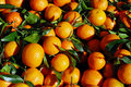 Tangerine Royalty Free Stock Photo
