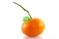 Tangerine a closeup of an organic easy peeler Royalty Free Stock Photo