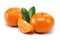 Tangerine Group Royalty Free Stock Image