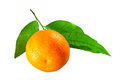 Tangerine with leaves one green isolated against a white background Royalty Free Stock Image