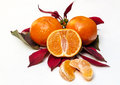 Tangerine with orange leaves surrounded by white background Royalty Free Stock Photos