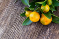 Tangerine tree Royalty Free Stock Photo