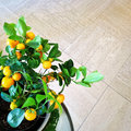 Tangerine tree in a pot on tile background Royalty Free Stock Images