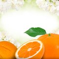 Tangerines photo of with slice and blossom abstract Stock Photos