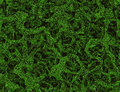 Tangled dreamy green grass texture Royalty Free Stock Photo