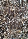 Tangled plant dead winter dried leaves autumn weeds weed bush leaves Royalty Free Stock Photo