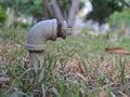 Tap garden Royalty Free Stock Photo