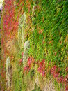 Tapis vegetal, Annecy ( France ) Royalty Free Stock Photo