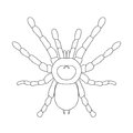 Tarantula spider Brachypelma smithi, spider female. spider top view. Sketch of spider Royalty Free Stock Photo