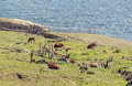 Tarifa coastline with vegetation and cows is located in the spanish province of cadiz Stock Photography