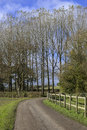 Tarmac country lane road rural environment countryside Royalty Free Stock Photos