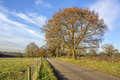 Tarmac country lane road rural environment countryside Royalty Free Stock Photography