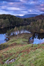 Tarn Hows Royalty Free Stock Photo