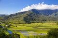 Taro Fields at Hanalei Valley, Kauai, Hawaii Royalty Free Stock Photo