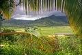 Taro Fields in Kauai Royalty Free Stock Photo