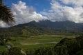 Taro Fields in Kauai, Hawaii Royalty Free Stock Photo