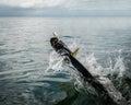Tarpon Fish Jumping Out Of Wat...