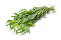 Tarragon Royalty Free Stock Image