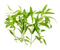 Tarragon herbs on white background Royalty Free Stock Photo