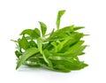 Tarragon herbs on white background Royalty Free Stock Photo