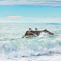 Tasman sea Stock Image