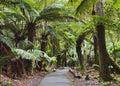 Tasmania Mt Field Disabled fern trees Royalty Free Stock Photo