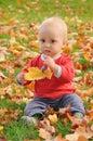 Taste of autumn Royalty Free Stock Photo