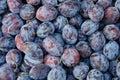 Tasty organic plums Royalty Free Stock Image