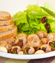 Tasty prepared escargot fresh green lettuce salad black olives bread garlic white plate restaurant luxury meal Royalty Free Stock Photo