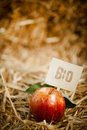 Tasty red apple on straw tagged as close up of bio product Royalty Free Stock Photos