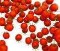 Tasty red cherry tomatoes flow over white Royalty Free Stock Photo
