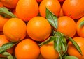 Tasty valencian oranges freshly collected closeup of spanish Royalty Free Stock Photos