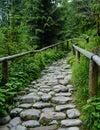 Tatra footpath national park zakopane poland Royalty Free Stock Image