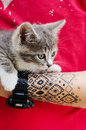 Tattooed hand with cat man holding kitty Royalty Free Stock Images