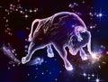 Taurus Bull Royalty Free Stock Photo