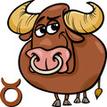 Taurus or the bull zodiac sign Stock Image