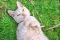 Tawny cat Royalty Free Stock Photography