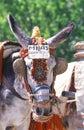 Taxi donkey in Mijas Stock Image