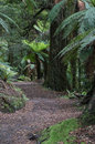 Te Urewera National Park forest walk Royalty Free Stock Photo