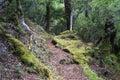 Te Urewera National Park walk Royalty Free Stock Photo