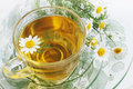 Tea of chamomile herbal drug healing drink Stock Photography