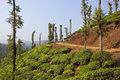 Tea country plantation landscape in the hills of wayanad kerala south india Stock Photos