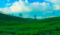 Tea estate in valaparai tamilnadu india valparai is famaous for and its greenish landscape Royalty Free Stock Image