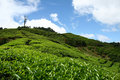 Tea Farm Stock Images