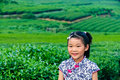 In the tea garden of Asian girls Stock Images