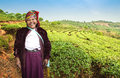 Tea goodwill peasant woman on a background of plantations in the vicinity of menghai Stock Photos