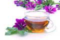 Tea malva Royalty Free Stock Photo